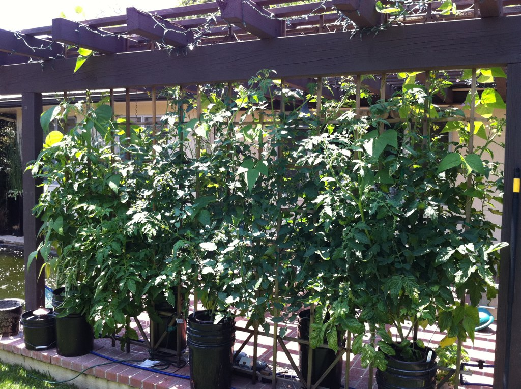 Growing systems bettergrow hydro blog for Hearty plants for outdoors